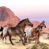 Лошади, серия Производителя Schleich-S